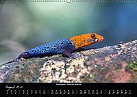 Costa Rica - Reptilien und Amphibien (Wandkalender 2019 DIN A2 quer) - Produktdetailbild 8
