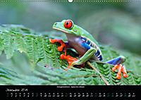 Costa Rica - Reptilien und Amphibien (Wandkalender 2019 DIN A2 quer) - Produktdetailbild 12