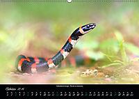 Costa Rica - Reptilien und Amphibien (Wandkalender 2019 DIN A2 quer) - Produktdetailbild 10