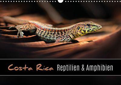 Costa Rica - Reptilien und Amphibien (Wandkalender 2019 DIN A3 quer), Kevin Eßer