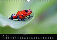 Costa Rica - Reptilien und Amphibien (Wandkalender 2019 DIN A4 quer) - Produktdetailbild 6