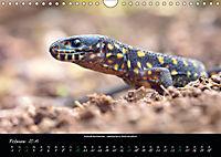 Costa Rica - Reptilien und Amphibien (Wandkalender 2019 DIN A4 quer) - Produktdetailbild 2