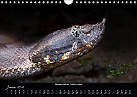 Costa Rica - Reptilien und Amphibien (Wandkalender 2019 DIN A4 quer) - Produktdetailbild 1