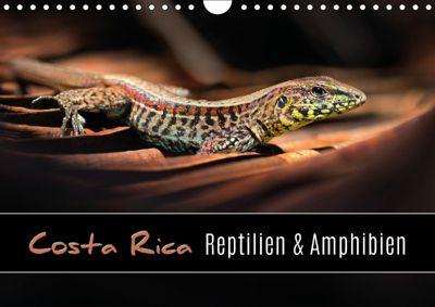 Costa Rica - Reptilien und Amphibien (Wandkalender 2019 DIN A4 quer), Kevin Eßer
