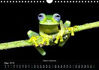 Costa Rica - Reptilien und Amphibien (Wandkalender 2019 DIN A4 quer) - Produktdetailbild 3