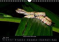 Costa Rica - Reptilien und Amphibien (Wandkalender 2019 DIN A4 quer) - Produktdetailbild 7