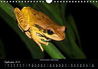 Costa Rica - Reptilien und Amphibien (Wandkalender 2019 DIN A4 quer) - Produktdetailbild 9