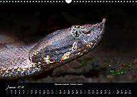 Costa Rica - Reptilien und Amphibien (Wandkalender 2019 DIN A3 quer) - Produktdetailbild 1