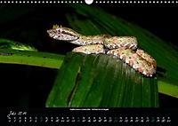 Costa Rica - Reptilien und Amphibien (Wandkalender 2019 DIN A3 quer) - Produktdetailbild 7