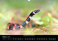 Costa Rica - Reptilien und Amphibien (Wandkalender 2019 DIN A3 quer) - Produktdetailbild 10