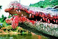 Crocodile II - Produktdetailbild 1