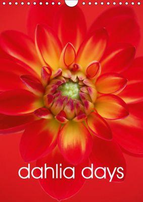 dahlia days (Wall Calendar 2019 DIN A4 Portrait), Brian Haslam