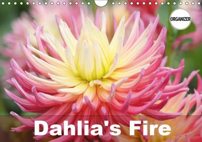Dahlia's Fire (Wall Calendar 2019 DIN A4 Landscape), Gisela Kruse