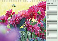 Dahlia's Fire (Wall Calendar 2019 DIN A4 Landscape) - Produktdetailbild 6
