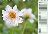 Dahlia's Fire (Wall Calendar 2019 DIN A4 Landscape) - Produktdetailbild 10