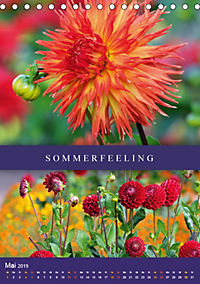 Dahlien - Der Sommer im Garten (Tischkalender 2019 DIN A5 hoch) - Produktdetailbild 5