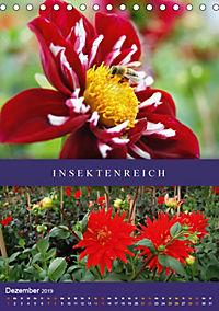 Dahlien - Der Sommer im Garten (Tischkalender 2019 DIN A5 hoch) - Produktdetailbild 12