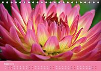 Dahlien (Tischkalender 2019 DIN A5 quer) - Produktdetailbild 3