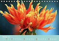 Dahlien (Tischkalender 2019 DIN A5 quer) - Produktdetailbild 10