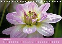 Dahlien (Tischkalender 2019 DIN A5 quer) - Produktdetailbild 2