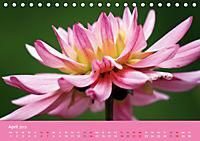 Dahlien (Tischkalender 2019 DIN A5 quer) - Produktdetailbild 4