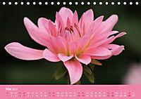 Dahlien (Tischkalender 2019 DIN A5 quer) - Produktdetailbild 5