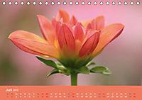 Dahlien (Tischkalender 2019 DIN A5 quer) - Produktdetailbild 6