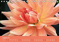 Dahlien (Tischkalender 2019 DIN A5 quer) - Produktdetailbild 8