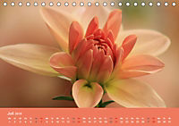 Dahlien (Tischkalender 2019 DIN A5 quer) - Produktdetailbild 7