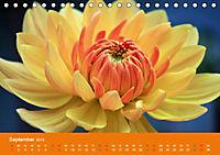 Dahlien (Tischkalender 2019 DIN A5 quer) - Produktdetailbild 9