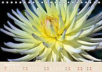 Dahlien (Tischkalender 2019 DIN A5 quer) - Produktdetailbild 12