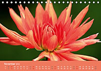 Dahlien (Tischkalender 2019 DIN A5 quer) - Produktdetailbild 11