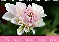 Dahlien (Wandkalender 2019 DIN A2 quer) - Produktdetailbild 1