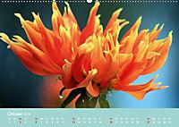 Dahlien (Wandkalender 2019 DIN A2 quer) - Produktdetailbild 10
