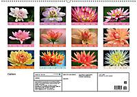 Dahlien (Wandkalender 2019 DIN A2 quer) - Produktdetailbild 13