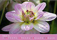 Dahlien (Wandkalender 2019 DIN A2 quer) - Produktdetailbild 2