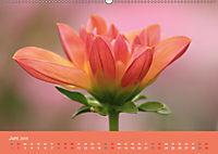 Dahlien (Wandkalender 2019 DIN A2 quer) - Produktdetailbild 6