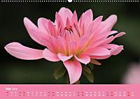 Dahlien (Wandkalender 2019 DIN A2 quer) - Produktdetailbild 5