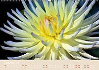 Dahlien (Wandkalender 2019 DIN A2 quer) - Produktdetailbild 12
