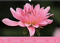 Dahlien (Wandkalender 2019 DIN A3 quer) - Produktdetailbild 5