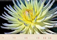 Dahlien (Wandkalender 2019 DIN A3 quer) - Produktdetailbild 12