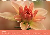 Dahlien (Wandkalender 2019 DIN A3 quer) - Produktdetailbild 7