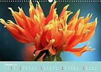 Dahlien (Wandkalender 2019 DIN A3 quer) - Produktdetailbild 10