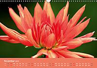Dahlien (Wandkalender 2019 DIN A3 quer) - Produktdetailbild 11