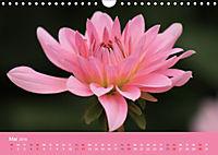 Dahlien (Wandkalender 2019 DIN A4 quer) - Produktdetailbild 5