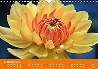 Dahlien (Wandkalender 2019 DIN A4 quer) - Produktdetailbild 9