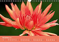 Dahlien (Wandkalender 2019 DIN A4 quer) - Produktdetailbild 11