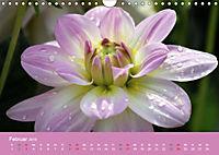 Dahlien (Wandkalender 2019 DIN A4 quer) - Produktdetailbild 2