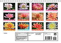 Dahlien (Wandkalender 2019 DIN A4 quer) - Produktdetailbild 13