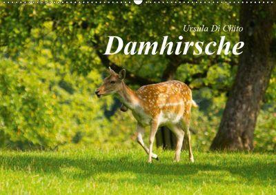 Damhirsche (Wandkalender 2019 DIN A2 quer), Ursula Di Chito